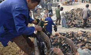 Blaut markaðir opna á ný í Kína